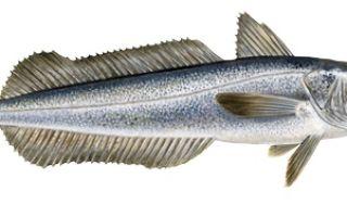 Сколько стоит рыба хек?