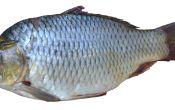 Сколько стоит килограмм рыбы?