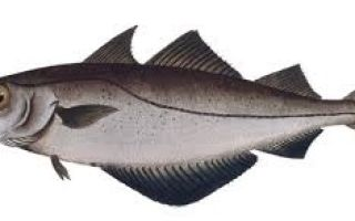 Сколько стоит рыба минтай?