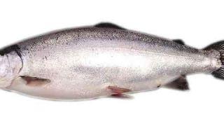 Сколько стоит рыба кета?