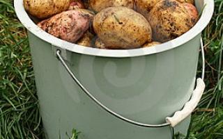 Сколько стоит ведро картошки: цена на рынке и в магазинах