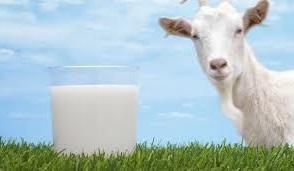 Сколько стоит козье молоко 1 литр