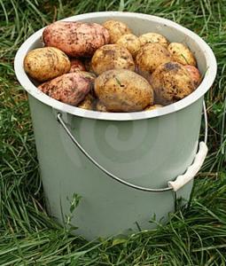 Сколько стоит ведро картошки