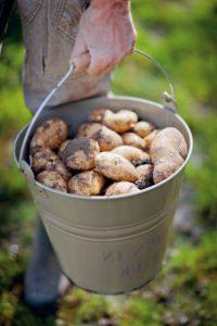 цена ведра картошки