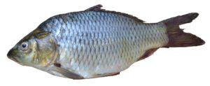 Сколько стоит килограмм рыбы