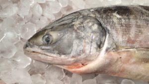рыба кета цена