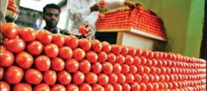 томат стоимость