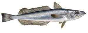 Сколько стоит рыба хек