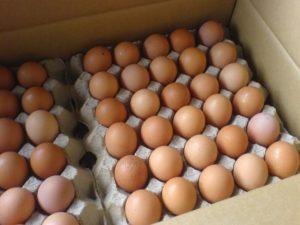куриные яйца цена