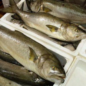 рыба хек стоимость