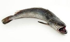 рыба хек цена