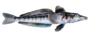 Сколько стоит ледяная рыба