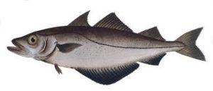 Сколько стоит рыба минтай