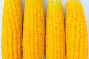 кукуруза стоимость
